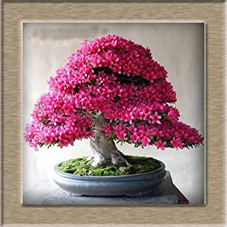 65 Pcsazalea Seeds Rhododendron 12 Diy Home & Garden Seeds Looks Like Sakura Ese Cherry Blooms Flower