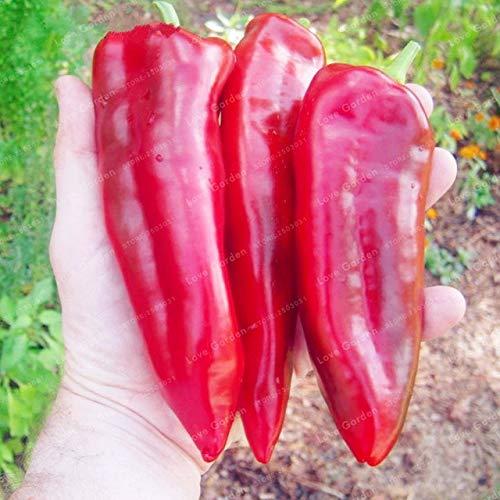 Shopvise de piment de semences de légumes 100 unités; couleur 1
