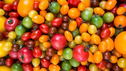 YINGCEFAN Malen Nach Zahlen Für Erwachsene Anfänger Kreatives Gemälde Auf Leinwand Farbenfrohe Home Haus Dekor 40*50 cm Tomatensorte