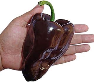 Dark Red 30++ Mulato Isleno Pepper Seeds #TKTY