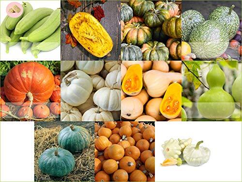 Prademir Kürbis Samen Set 11 x verschiedene Kürbis Saatgut alte Sorten Anzucht für Garten und Balkon Gewächshaus Pflanzset Gemüsesamen