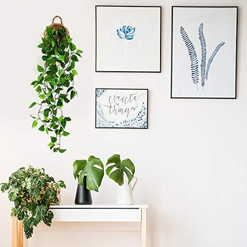 ANZOME Plantas