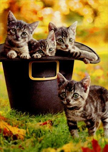 Kittens In Pilgrim Hat - Avanti Cat Thanksgiving Card