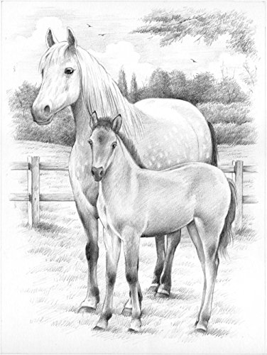 Reeves PPSKM3 Horse and Foal Sketching by Numbers, Medium