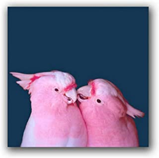 Shengmiao Pink Cockatoo Poster Bird Photography Wall Art Canvas Print Tropical Painting Picture Living Room Home Decor-4040Cm No Frame