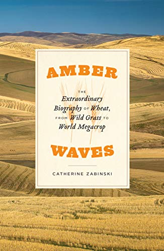 Amber Waves: The Extraordinary Biography of Wheat, from Wild Grass to World Megacrop (English Edition)