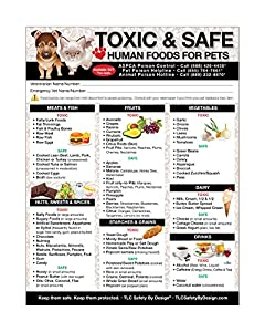 Chart showing toxic and safe foods for dogs