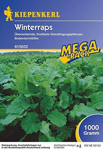 Winterraps 1 Kg