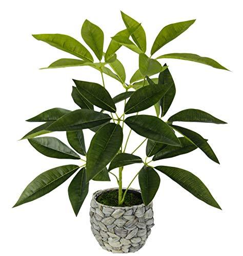 Flair Flower, Verde, Schefflera en Maceta de Jacinto de Agua, Arte, Flores de Seda, Real Touch, Plantas Artificiales, Plantas Decorativas, Grande, 48 x 30 cm
