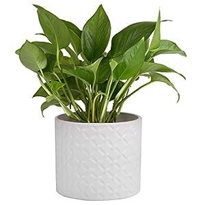 Silk Flower Arrangements 5-Inch White Ceramic Round Succulent Plant Pot, Small Flower Planter with Diamond Texture