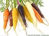 Portal Cool Karotte mezcla Bunt 500 semillas blancas + amarillo + naranja + rojo + zanahorias moradas