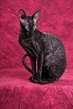 The Cornish Rex Cat Journal I Hereby Grant You Permission to Bask in My Glory: 150 page lined notebook/diary by Cat Breeds (2016-02-23)