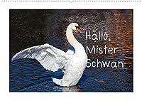 Hallo, Mister Schwan (Wandkalender 2022 DIN A2 quer): Meine schoensten Schwaene (Monatskalender, 14 Seiten )
