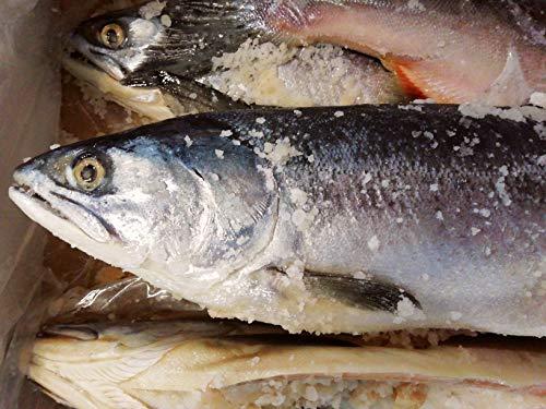 産直丸魚 北海道産 道東沖獲り 塩ます 1本入     塩マス 汐ます しおます シオマス 汐マス 鱒 ます マス 鮭 さけ (丸のままお届け)