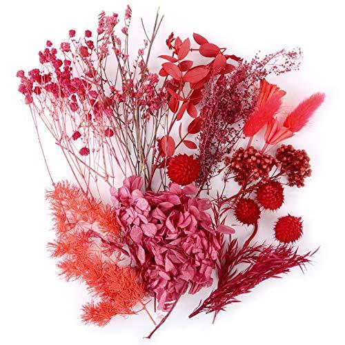 UFLF 12 Tipos de Flores Preservadas Secas Naturales Variadas Plantas Secas Flores para Regalos Navidad Decoración Vela Resina DIY Manualidad Artesanía Bricolaje