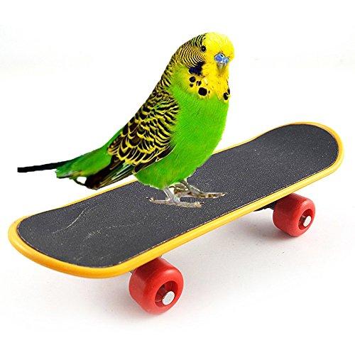 Upper Skateboard für Vögel Vögel Mini Skateboard Training für Haustiere