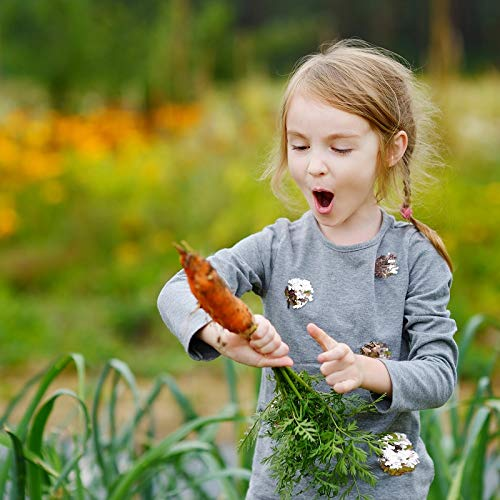 Happy Garden - Carottes arc-en-ciel - Des graines que les enfants peuvent cultiv