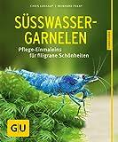 Süßwasser-Garnelen gelb 12 x 3,5 cm:...