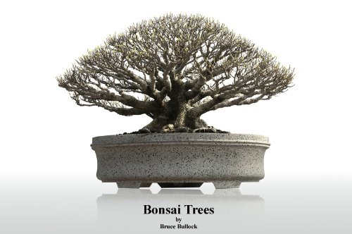 Bonsai Trees (English Edition)