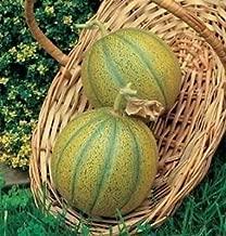 5 Samen Warzenmelone Cantaloupe Zuckermelone /'Charentais/' Cucumis melo
