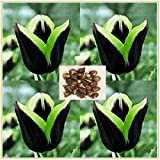 Tulip Bulbs-Perennial secret garden bonsai, spectacular house organic plants, blooming in spring-10 Zwiebeln