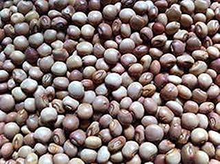 Bulk Pigeon Pea Seeds, A. k.S Gandules Bean, Jamaican Gungo/Congo Peas Tropical Green Pea,(Cajanus cajan) Heirloom Seeds~ Perennial (3 lbs) by AchmadAnam