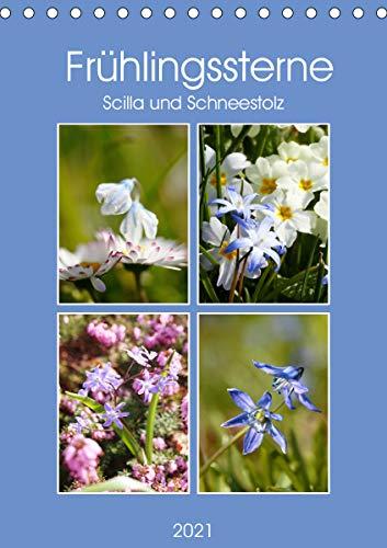 Frühlingssterne Scilla und Schneestolz (Tischkalender 2021 DIN A5 hoch)