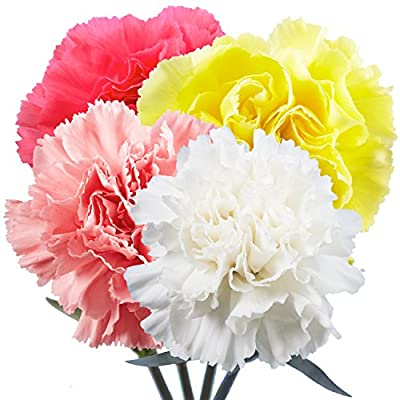 Carnations Fresh Flowers - 100 Assorted Color- Next Day Delivery from Globalrose