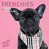 Frenchies - Französische Bulldoggen 2020: Original Myrna-Kalender [Mehrsprachig] [Kalender] (Wall-Kalender)