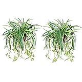 Almabner 2 plantas trepadoras, helechos artificiales colgantes para pared, decoración ext...