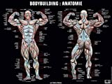 Poster bodybuilding anatomie