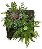 Maia Shop Jardín Vertical, Ideal para Decoración del Hogar u Oficina, Diseño de Espacios, �rbol, Flor, Planta Artificial (42 x 42 cm)