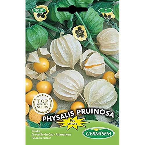 Germisem Physalis Pruinosa Semillas de Edulis 0.4 g, EC8019