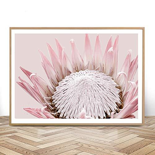 Zqylg König Protea Druck Australian Native Flower Botanical Große Wandkunst Poster Dekor Erröten Rosa Blumen Leinwand Gemälde Bilder 16x24 Zoll ohne Rahmen