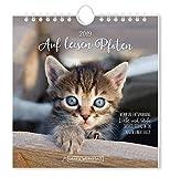 Postkartenkalender 2019 Auf leisen Pfoten