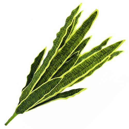 Euro Palms 82530577 Sansevieria, Eva, 50 cm, Verde-Amarillo
