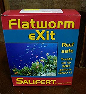 flatworms reef tank