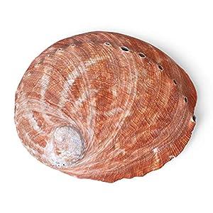Natural Abalone Shell Bowl Incense Burner