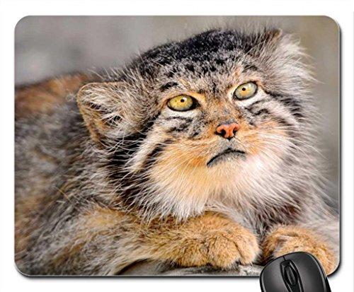 Vina Don't You Dare Come Near Me Mouse Pad, Tapis de Souris (Cats Mouse Pad)