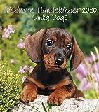 Niedliche Hundekinder 2020 - Wandkalender - 30x34cm - Tierkalender - Fotokalender - Hundekalender