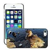 Grand Phone Cases Etui Housse Coque de Protection Cover Rigide pour // M00140897 Pato del pájaro de Agua de la charca de // Apple iPhone 5 5S 5G