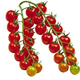 semi di pomodorini rossi 30+ sweet lycopersicon cherry cascade ortaggi biologici freschi frutta piante facili da coltivare semi per giardino domestico piantare all'aperto