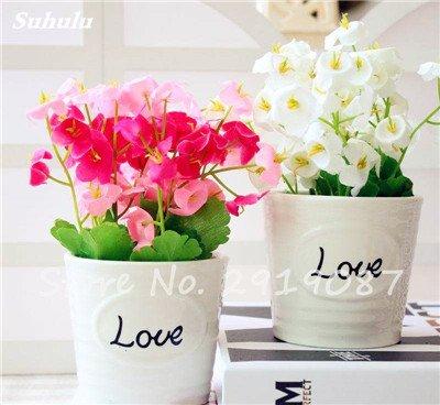 50 Pcs Campanula Graines rares Fleur Plante en pot Couleurs mélangées 95% Taux de bourgeonnement vivaces Plantes Bonsai Maison et Jardin 11