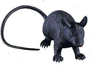 the giant rat