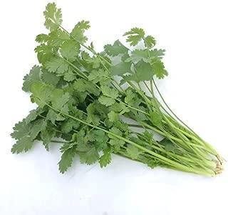 サラダ野菜5種10袋パクチー&バラエティセット(パクチー・サラダほうれん草・サラダ水菜・サラダ小松菜・スイスチャード)