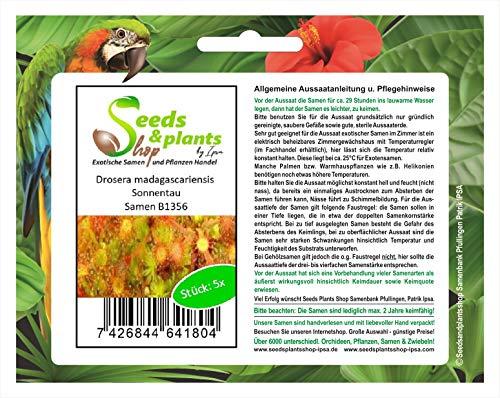 Stk - 5x Drosera madagascariensis Sonnentau Garten Pflanzen - Samen B1356 - Seeds Plants Shop Samenbank Pfullingen Patrik Ipsa