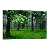 YRTW 2 x Amazonas-Regenwald-Poster mit natürlicher