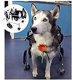 wsbdking Silla de ruedas del perro XL for el perro grande Forelimb Firma de la extremidad trasera Carrito 4 ruedas ajustable deshabilitado animal scooter perro mayor perro perro for bulldog, pastor, e