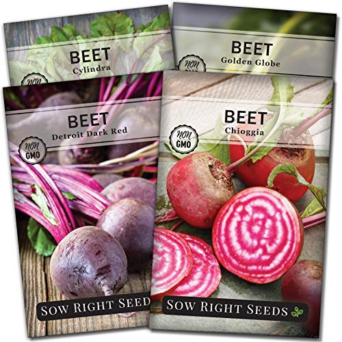 Sow Right Seeds - Beet Seed Collection for Planting - Detroit Dark Red, Golden Globe, Chioggia, and Cylindra Varieties Non-GMO Heirloom Seeds to Plant a Home Vegetable Garden - Great Gardening Gift
