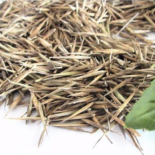 Rosepoem 100 Pcs Vert Tinwa Phyllostachys Pubescens Moso-Bambou Graines Jardin Bambou